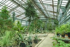 Interior of old tropic greenhouse Stock Images