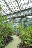Interior of old tropic greenhouse Stock Photography