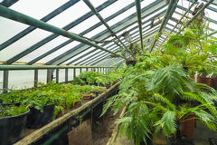 Interior of old tropic greenhouse Royalty Free Stock Images