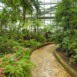 Interior of old tropic greenhouse Stock Photo