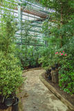 Interior of old tropic greenhouse Royalty Free Stock Image