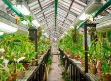 Interior of old tropic greenhouse Royalty Free Stock Photos