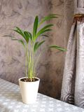 Interior with plant Royalty Free Stock Images