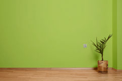 Interior room with wooden floor, plant and wall in green with an electrical contact in the wall and wooden skirting Stock Photography