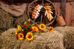Interior of a rural farm - hay, wheel, garlic, onions, sunflower Royalty Free Stock Photo