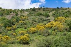Interior siciliano com montanhas, os arbustos de florescência e as árvores Fotos de Stock Royalty Free
