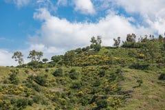 Interior siciliano com montanhas, os arbustos de florescência e as árvores Fotografia de Stock