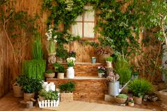 The interior of spring yard. Patio of a wooden house with green plants in pots. Gardening on steps of house. Rustic terrace. Count