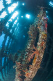 Interior of an underwater shipwreck Royalty Free Stock Photos