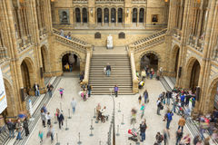 Interior view of Londons Natural History Museum. Stock Images