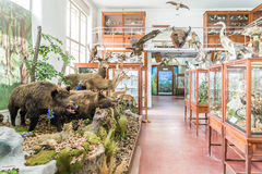 Interior Of Zoological Museum Of Cluj Stock Photo