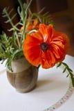Interiores caseros, flor roja de la amapola en florero de cerámica Foto de archivo