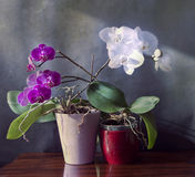 Interiors, orchid plants vase on wooden table  with beautiful pu Stock Photos
