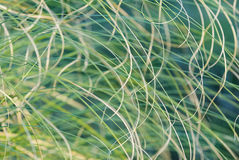 Interlaced. Detail of herbs of different tones on the coast Stock Photography