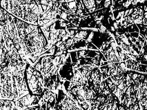Interlacing of branches. Tree without leaves with the bound branches in a grunge style stock photography