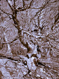 Interlacing branches Stock Images