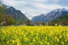 Interlaken - Schweiz Arkivbilder