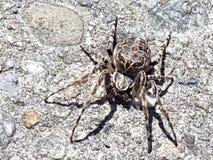 Arachnid Beauty. Interlaken Switerland spider stock photography