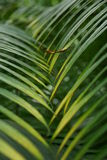 Interleaved palm leaves Stock Photography