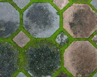 Interlocking concrete pavement with moss growing along Royalty Free Stock Image
