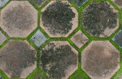 Interlocking concrete pavement with moss growing along Stock Image
