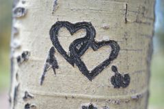 Interlocking Hearts Carved in Tree royalty free stock photo