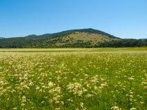 Intermittent Lake Petelinje. Intermittent lake is typical in slovenian Green Karst. In dry summer season looks like meadow Royalty Free Stock Image