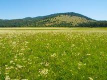 Intermittent Lake Petelinje. Intermittent lake is typical in slovenian Green Karst. In dry summer season looks like meadow Stock Image