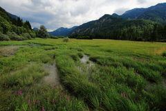 Intermountain Bavarian Meadow Stock Images