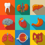 Internal human organs flat long shadow icons set Stock Photos