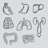 Internal human organs hand drawn icons set. With - heart, brains, lungs, liver, kidneys, intestine, stomach Stock Photos