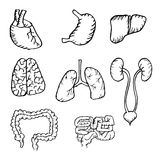Internal human organs hand drawn icons set. With - heart, brains, lungs, liver, kidneys, intestine, stomach Stock Image