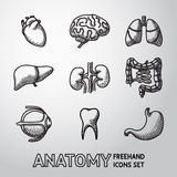 Internal human organs handdrawn icons set with - Royalty Free Stock Image