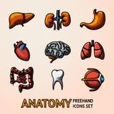 Internal human organs handdrawn icons set with - heart, brains, lungs, liver, kidneys, intestine, eye, teeth, stomach Stock Photo