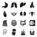 Internal human organs icons set. In black simple design style. Vector illustration on white background Royalty Free Stock Photography