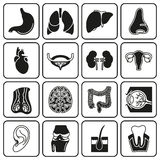 Internal human organs icons set. In black symple design style. Vector illustration on white background Stock Photography
