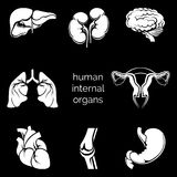 Internal human organs silhouettes Stock Photos