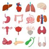 Internal organs cartoon icons Stock Image