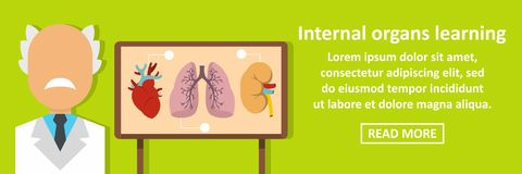 Internal organs learning banner horizontal concept Royalty Free Stock Image