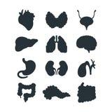 Internal organs silhouette vector illustration. Royalty Free Stock Photo