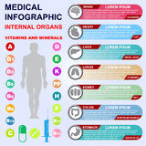 Internal organs. Vitamins and minerals. Medical infographics Royalty Free Stock Photo
