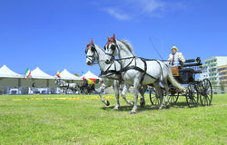 International Arabian Horses Cup, Sicily Italy Stock Photo