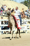 International Camel Races in Virginia City, NV, US Stock Images