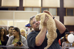 International Cat Exhibition Royalty Free Stock Photography