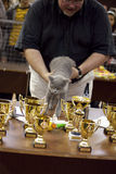 International Cat Exhibition Stock Image