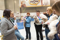 International Cat Show Ketsburg at  Crocus Expo in Moscow, Russia Stock Photos