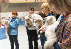 International Cat Show Ketsburg at  Crocus Expo in Moscow, Russia Stock Images