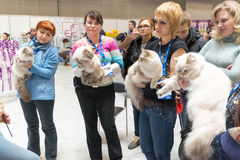 International Cat Show Ketsburg at  Crocus Expo in Moscow, Russia Stock Image