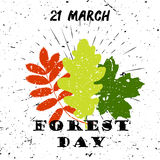 International day of forest 21 March Black Lettering Typography with oak, marple, rowan tree leaves burst on a Old Royalty Free Stock Photography