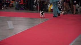 International Dog Show CACIB-FCI stock video footage